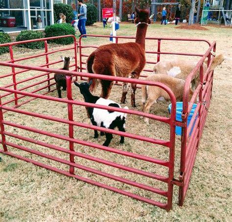 Petting Zoo NC | Petting Zoo Near Me | Carolina Fun Factory