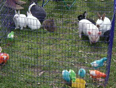 Petting Zoo on Party Rentals