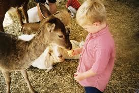Petting Zoo Rentals for Los Angeles and Orange County ...
