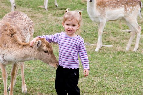 Petting Zoo – Marsha s Petting Zoo