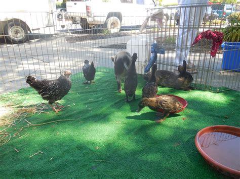 Petting zoo set up   Yelp