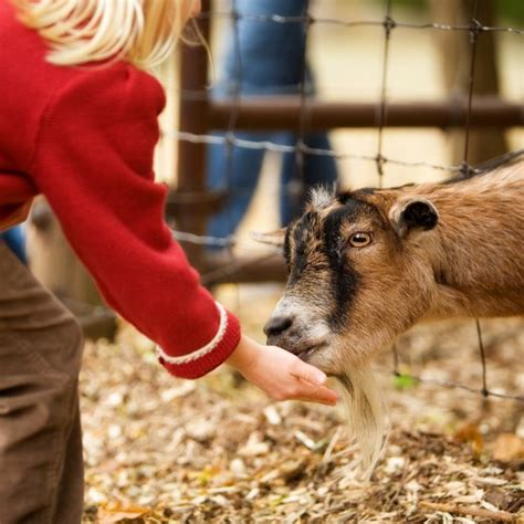 Petting Zoos in Oregon   USA Today