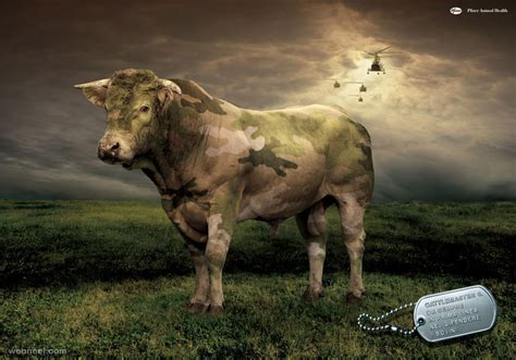 Pfizer Animal Health Cow Ad 15
