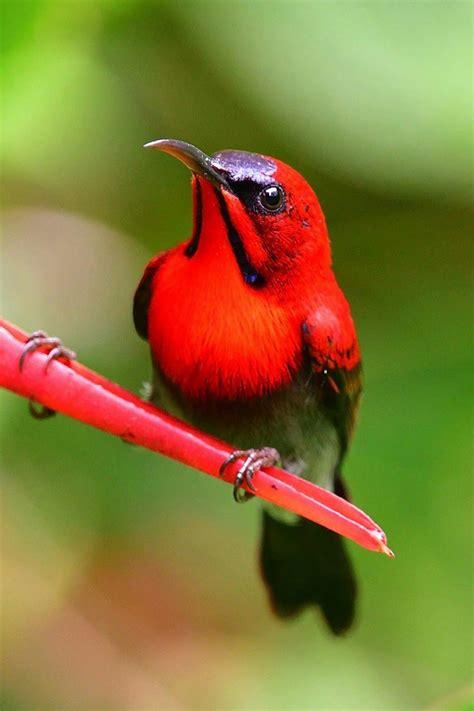 Photo   #birds | Pájaros hermosos, Aves exóticas y Aves ...