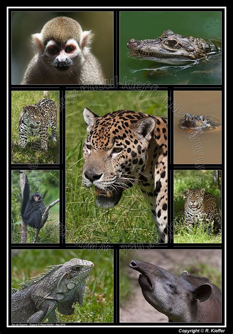 Photo Gallery   French Guiana Zoo: The 160 acre of the ...