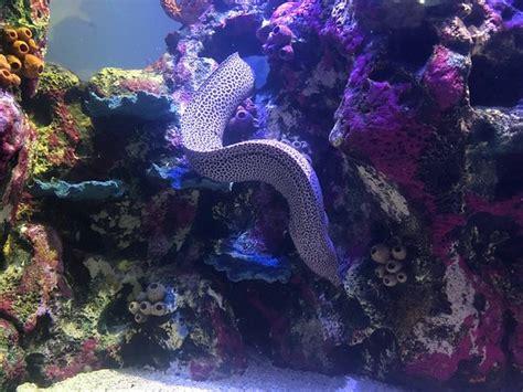 photo2.jpg   Picture of Shreveport Aquarium, Shreveport ...