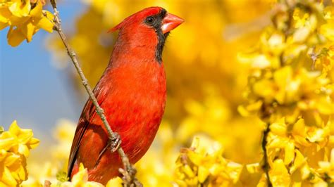 Photograph Birds with any Camera using a Blind & Bird ...