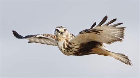 Photographing Raptors in Flight — Ron Dudley Bird ...