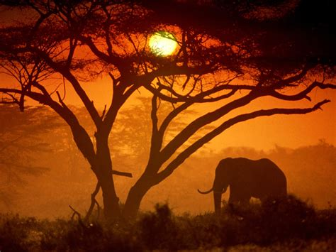 Photos Kenya   Nature en images