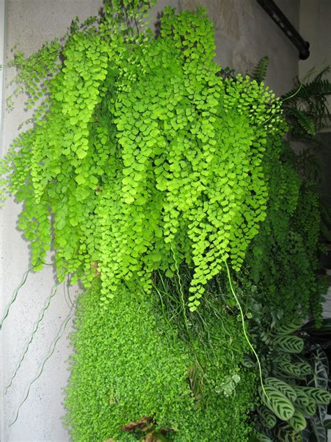 Photos mur végétal   Idéias de jardinagem, Jardinagem ...
