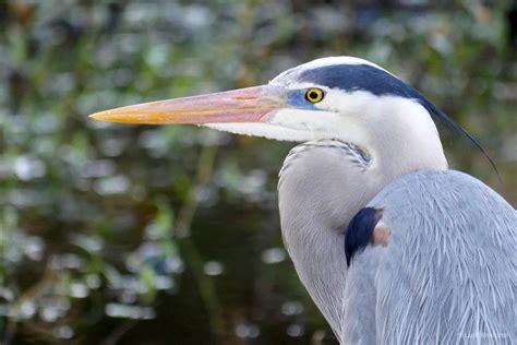 Photos of Florida Gulf Coast Birds   LuciWest