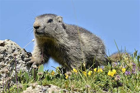 Photos of wildlife in France