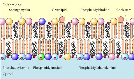 Physiology Made Easy: Cell Membrane