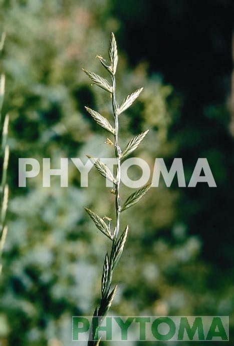 Phytoimages