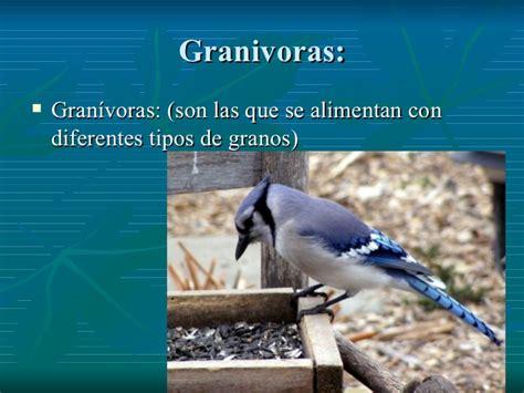 Picos de aves según su alimentación