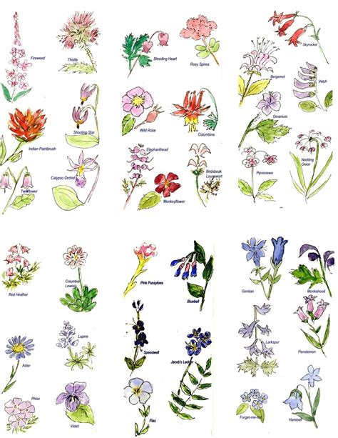 pictures of flower names   Google Search | Flowers names ...