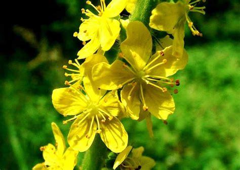 Pin auf plantas medicinales
