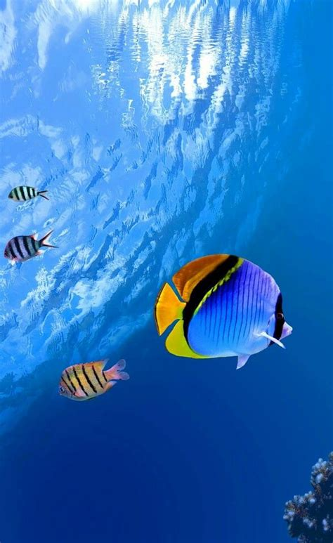 Pin by Alaa As on Stuff to buy   Tropical fish, Ocean ...