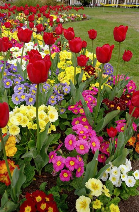 Pin by Cheap Flowers Online on Flower Pictures  With ...