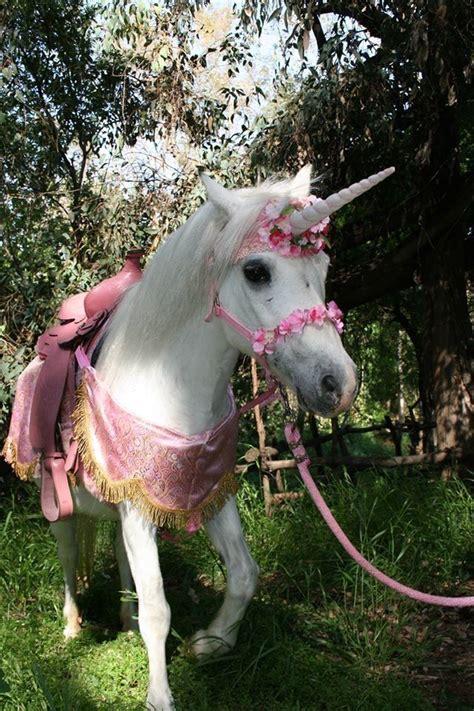 Pin by Dee on nice | Baby unicorn, Cute baby animals ...