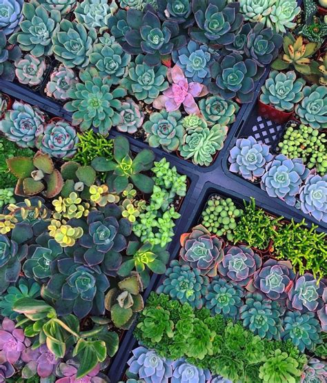 Pin by Didem Orbay on Ideas Bar & Restaurant   Planting ...