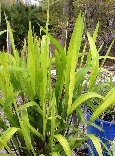 Pin by Faddegon s Nursery on Plants! Plants! Plants ...