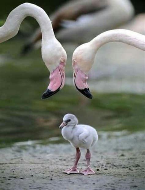 Pin by IRMA GARCIA on Ducks, Swans, Birds And Bats ...