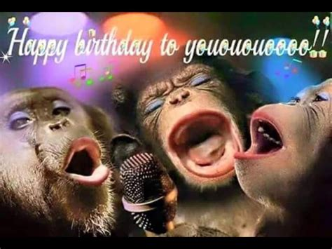 Pin by Judy Shay on FUN | Funny happy birthday pictures ...