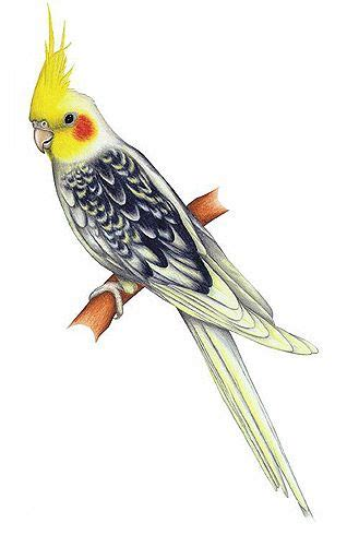 Pin by SANET on | Bird Graphics | in 2019 | Bird drawings ...