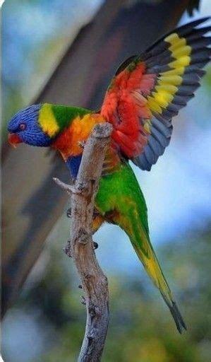 Pin de Aldo Gil en Naturalia | Aves exoticas del mundo ...