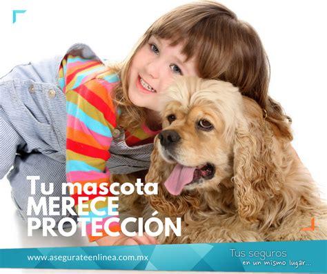 Pin de Asegurate en Linea en Seguro de Mascotas   Mascotas ...