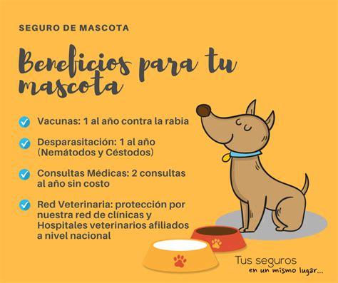 Pin de Asegurate en Linea en Seguro de Mascotas   Seguro ...