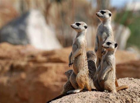 Pin de B&B Hi Valencia en Bioparc Valencia | Animales ...