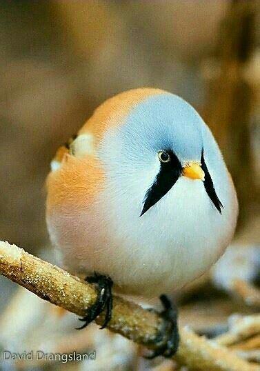 Pin de Helena en animales | Aves pajaros, Aves raras y ...