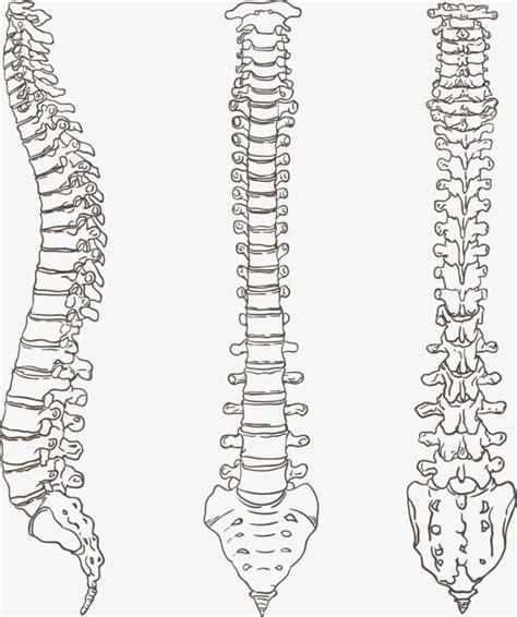 Pin de Itzel Aidee en Anatomía en 2019 | Huesos anatomia ...
