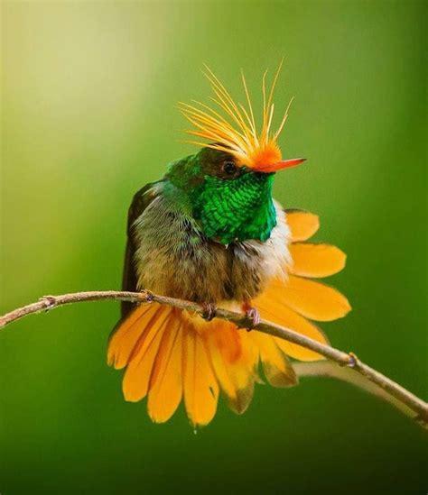 Pin de jhoel retamoso en Color | Aves exóticas, Aves ...
