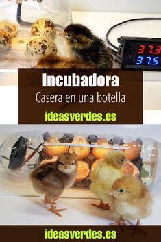 Pin de Jose Figueres en Casas para gallinas en 2020 ...