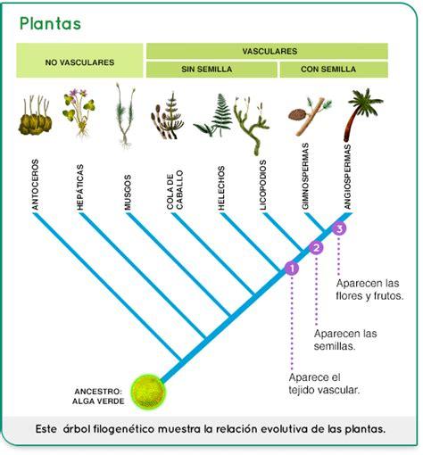 Pin de Lizz Perez en cladograma | Arboles planta, Plantas ...