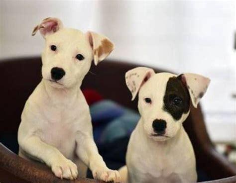 Pin de luis valenciano en dogs   Instagram, Motores de ...