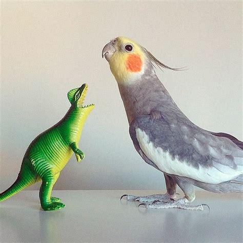 Pin de Maria Parada en cacatua | Pinterest | Ninfas aves ...