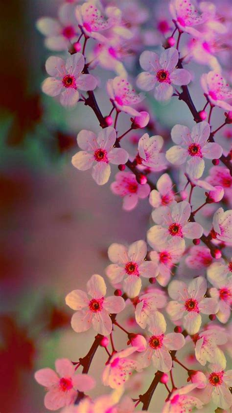 Pin de Muh. Al Haddar en Bunga | Fondos de pantalla flores ...