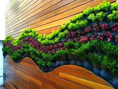 Pin de Planta Oxigeno en Muros verdes inspiración ...