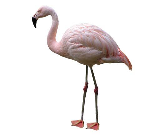 Pin de Rosario Nanetti en Aves: flamencos   Flamingos ...
