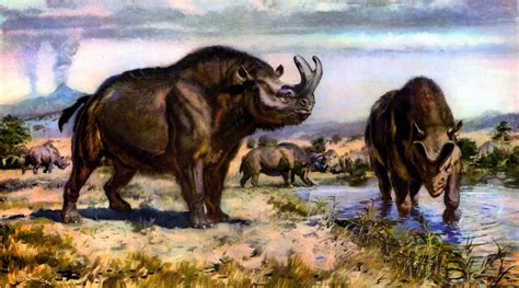 Pin di Gianluca Romano su MAMMALS since 50 millions years!
