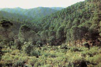 Pin en Biomas de America