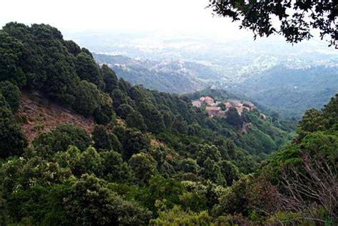Pin en Bosque mediterraneo