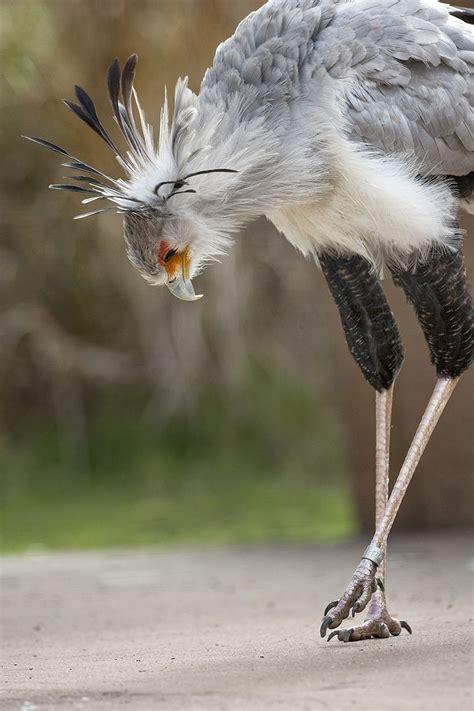 Pin on birds 2