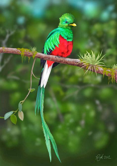 Pinceladas Actuales: El Quetzal, Ave Nacional de Guatemala