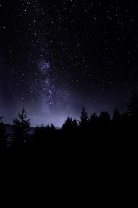 pine trees under starry sky photo – Free Night Image on ...