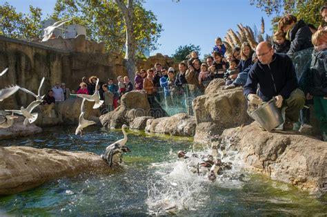Pingüinos De Alimentación En El Parque Zoológico De ...